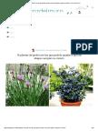 16 Plantas de Jardín Con Las Que Podrás Ayudar a Que Las Abejas Cumplan Su Misión – La Voz Del Muro