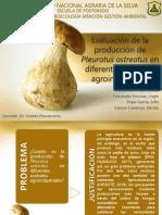 Evaluación de Pleurotus ostreatus en sustratos agroindustriales