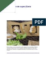 produccion_cuyes.pdf