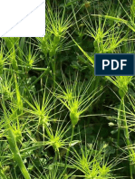Genetic variability and phylogenetic relationships studies of Aegilops L. using some molecular markers