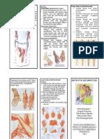 leaflet artritis rhematoid.doc