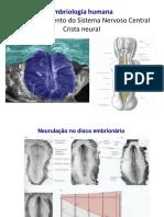 Embriologia Aula 6