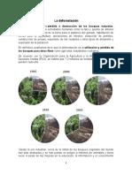 La Deforestacion