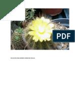 Cactus en flor.docx