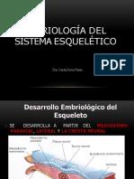 Sistema Esqueletico Embrio