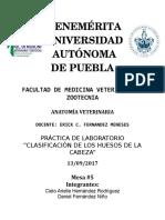 Reporte-Huesos de La Cabeza