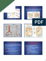 Sistema Endocrino-Av (1)