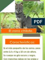 el zorro chilote.pptx