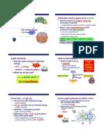 Aicebio Photosynthesis Part2 Calvin Paxson