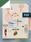 TIPS SAINS - 02.5 - Memahami Otak Manusia Dan Kerencamannya