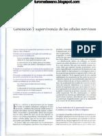 Capitulos 53 - Generación y supervivencia de células nerviosas.pdf