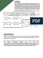 Sintomatología Interna Girasol Nutrientes - Toxicidad por Boro