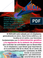 nucleo2.ppt