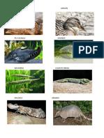 Animales en Peligro de Extinsion