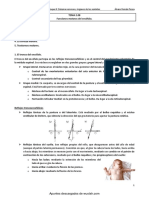 Funciones Motoras Del Encefalo
