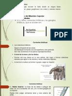 vasos linfaticos