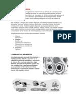 Remediación microbiana.docx