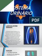 EXPO. Ciencia Sistema Urinario