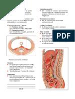 15. Peritoneo.doc