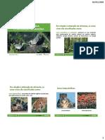 Fluxo de Energia, Ciclo Da Matéria e Sucessão Ecológica