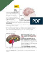 Cerebro y Perc Epcion