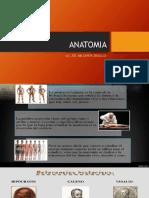 Anatomia 33 0