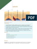 formation de petrole.docx