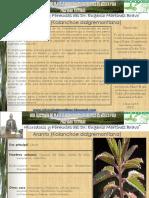 YERBA BRUJA.pdf