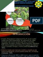 Mashua  Primera Parte .Pptx