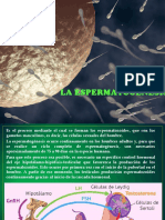 La Espermatogénesis Final
