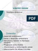 4to-electivo_diferenciacion_celular.ppt