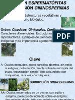 Subdivisión Gimnospermas