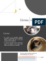 ulcera corneal pequeñas especies