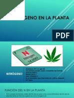 El Nitrógeno en La Planta