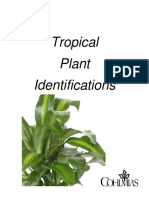 Tropical Plant Identifications