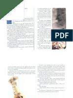 4°básico_texto y actividad_Androcles y el león.pdf