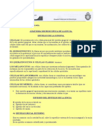 Microanatomia Del Periodonto