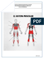 4 Guia de Aprendizaje Musculos