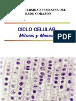 Clase 6 Ciclo Celular