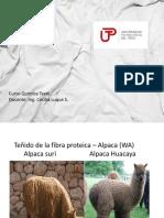 Teñido de Fibra Protéica-WA (1)