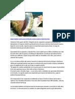 Información del caracol rosado