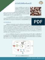 8_เทคโนโลยีแก๊สซิฟิเคชันเศษไม้.pdf