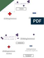 Mapa Microbio Relatorio 5