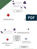 Mapa Microbio Relatorio 5 v2