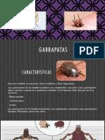 Garrapatas Parasitologia Lnuem 2