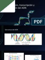 Replicación, transcripción y traducción del ADN.pptx