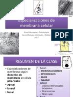 Especilizaciones de Membranas Celulares
