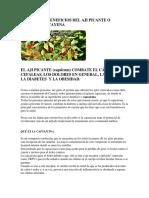 Conoce Los Beneficios Del Aji Picante o Pimiento de Cayena