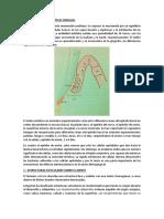 1 RENOVACIÓN DEL EPIT. GINGIV. doc.docx