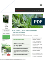 Can Stress Cause Hermaphrodite Marijuana Plants
